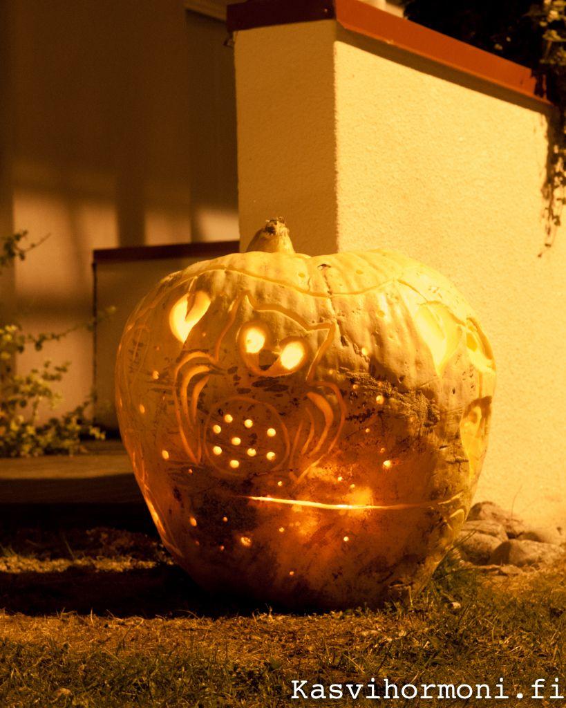 Halloween lähestyy! Nyt on aika ryhtyä kurpitsan kaiverrukseen. Tarvitset akkuporakoneen, pari talttaa sekä keittiöstä hedelmäveitsiä, kokkiveitsiä ja kauhoja. Text and photo Sini Kuha viherpiha.fi