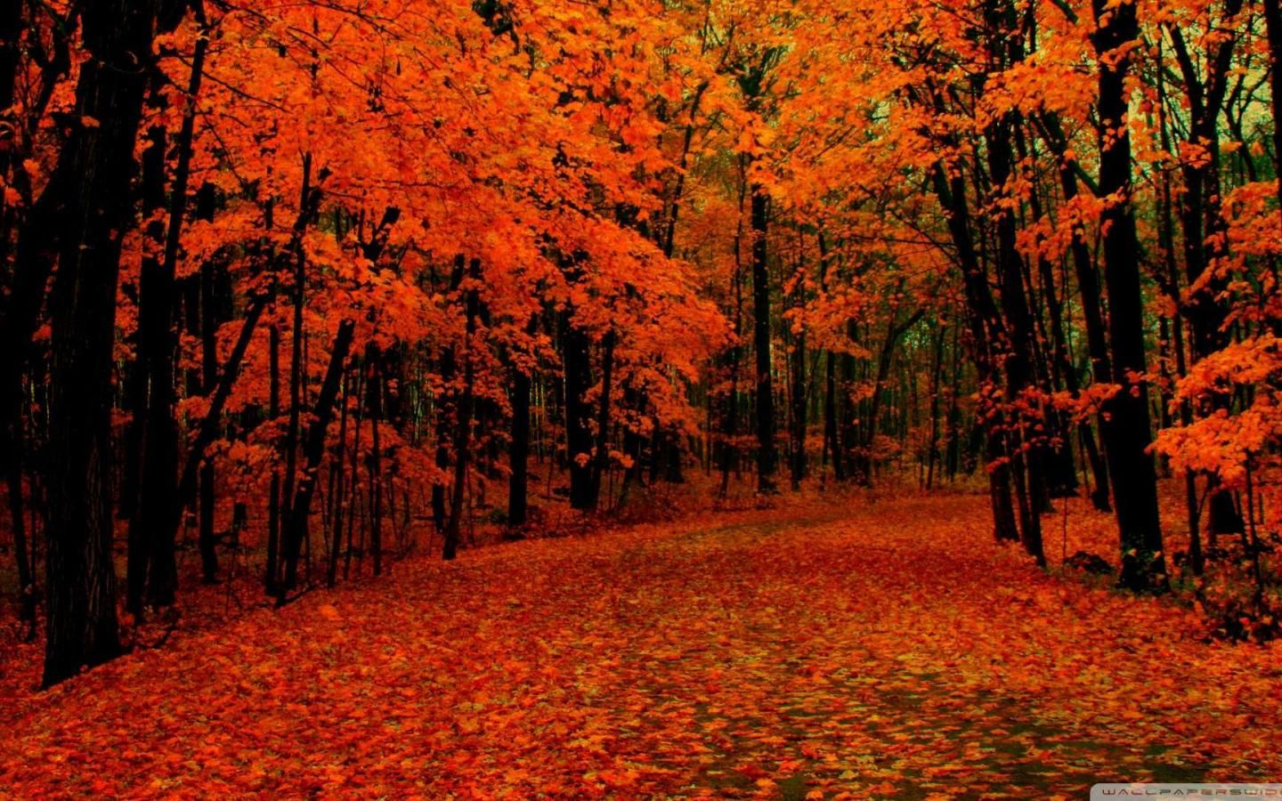 Fall Desktop Wallpapers Fall Background Images Fall Wallpaper Autumn Leaves Wallpaper