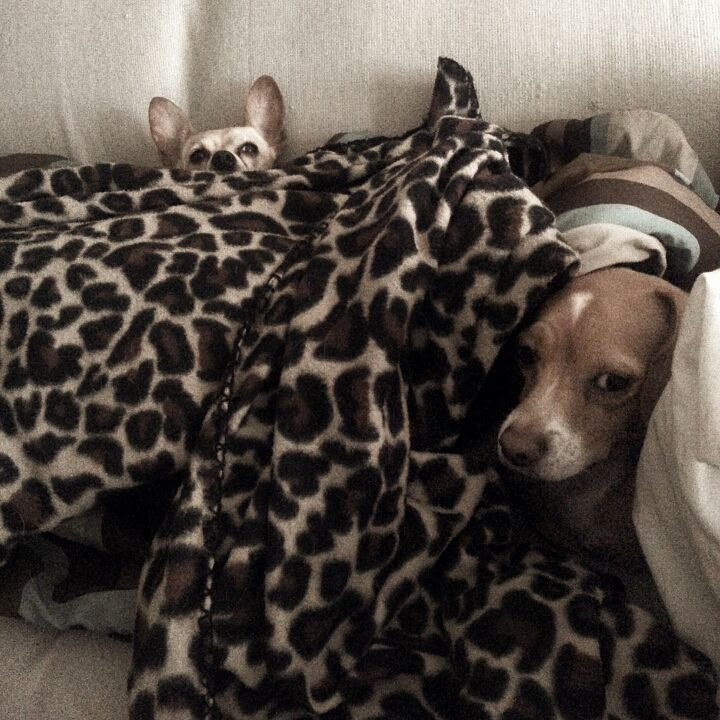 DIY 10 minute Pet Burrow Bed Diy pet bed, Diy dog stuff