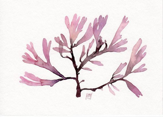 Red Seaweed  Original watercolor painting 5x7 by SandraOvono, €25.00