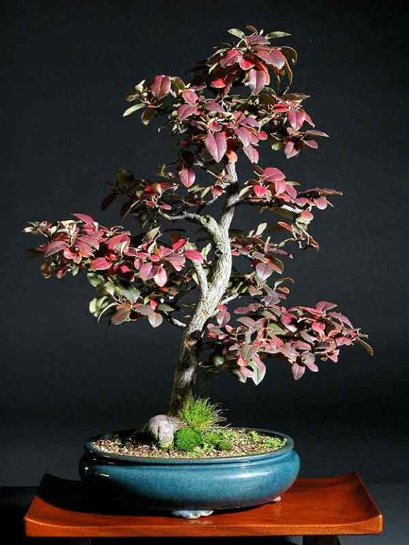 Pin By Catherine Byrne On Bonsai  With Images
