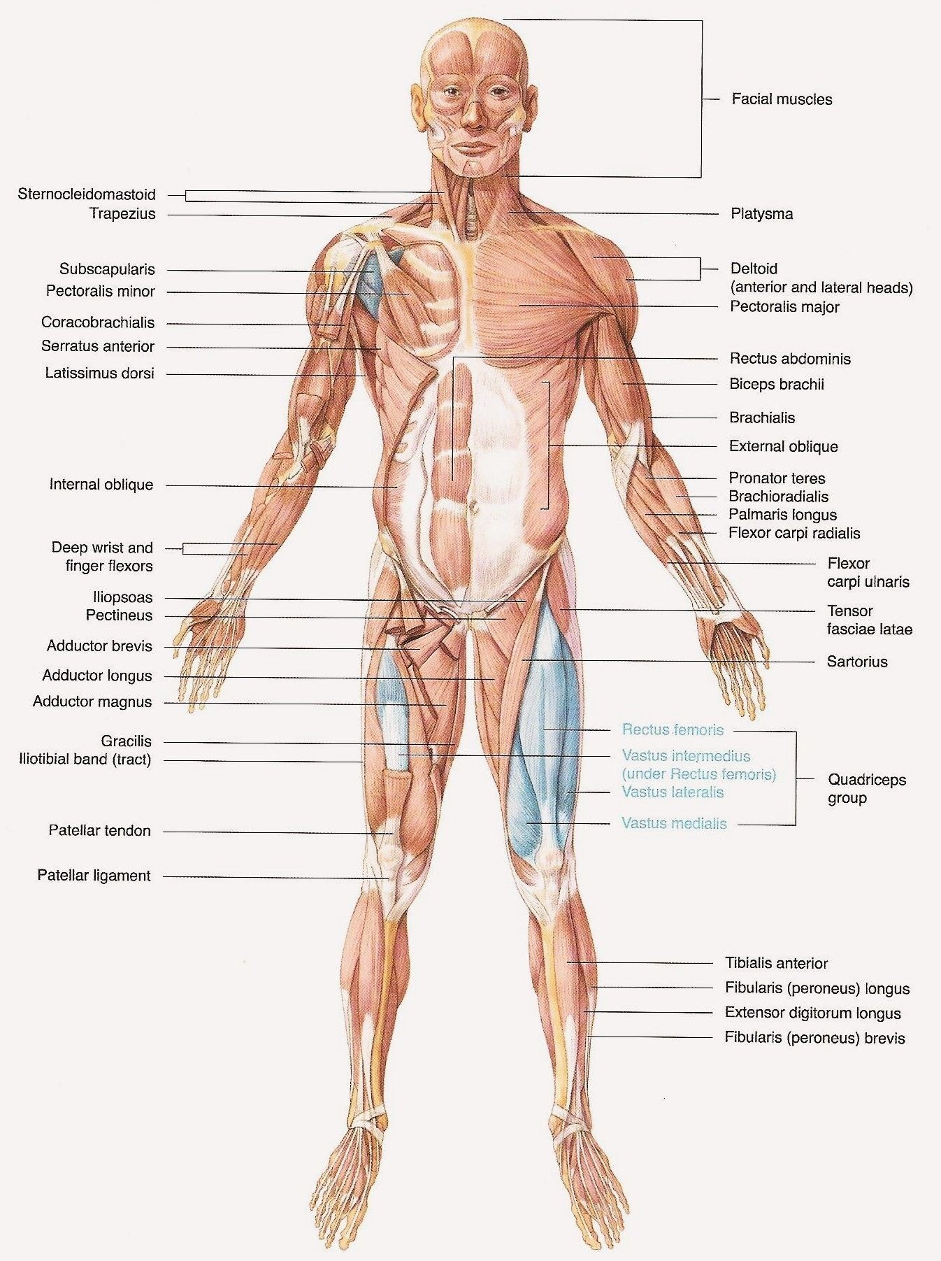 hight resolution of body diagram label schematic diagram databasebody diagram without labels wiring diagrams konsult golgi body diagram labeled