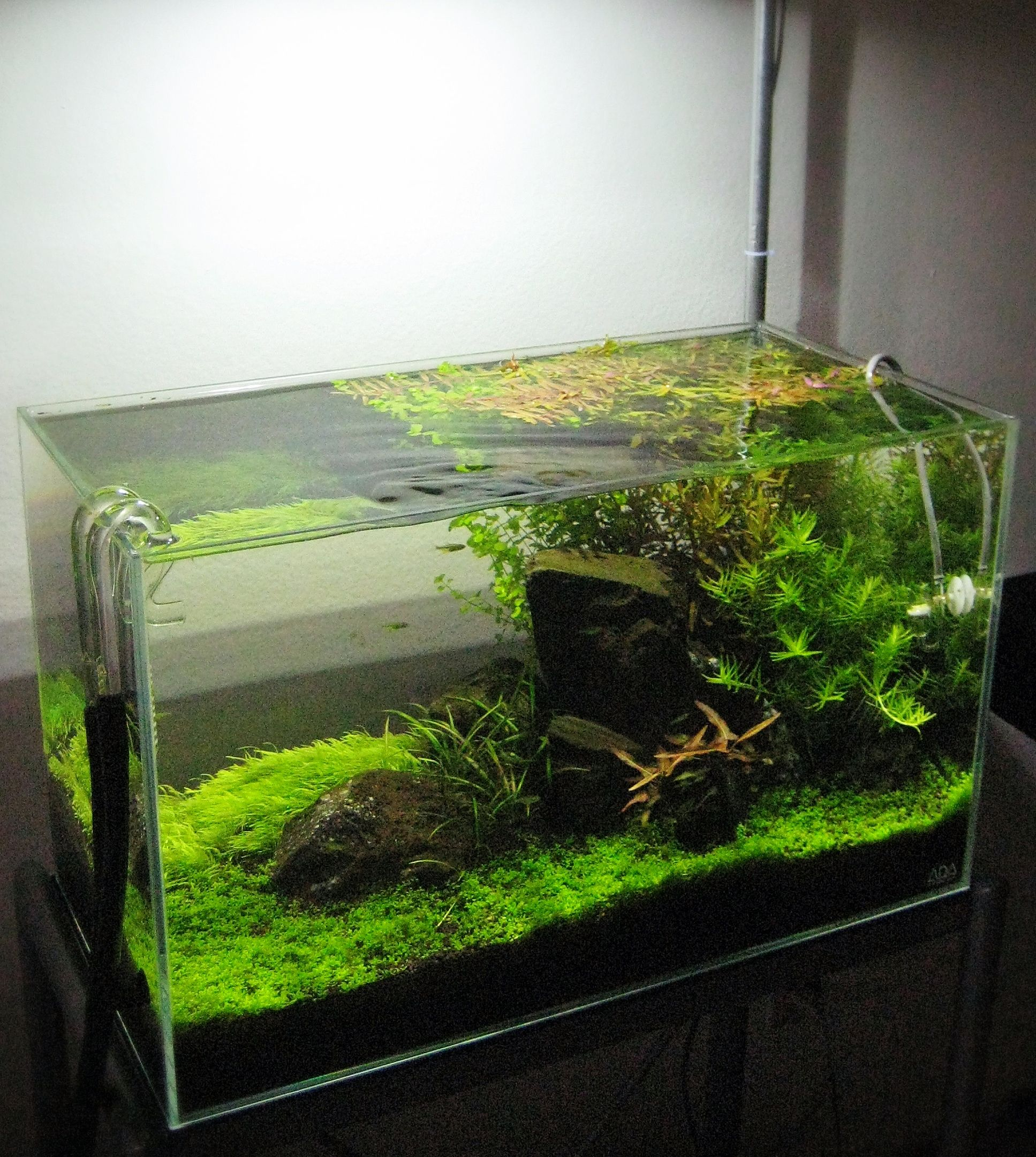 Tetrascape Designs 20 gallon freshwater planted tank