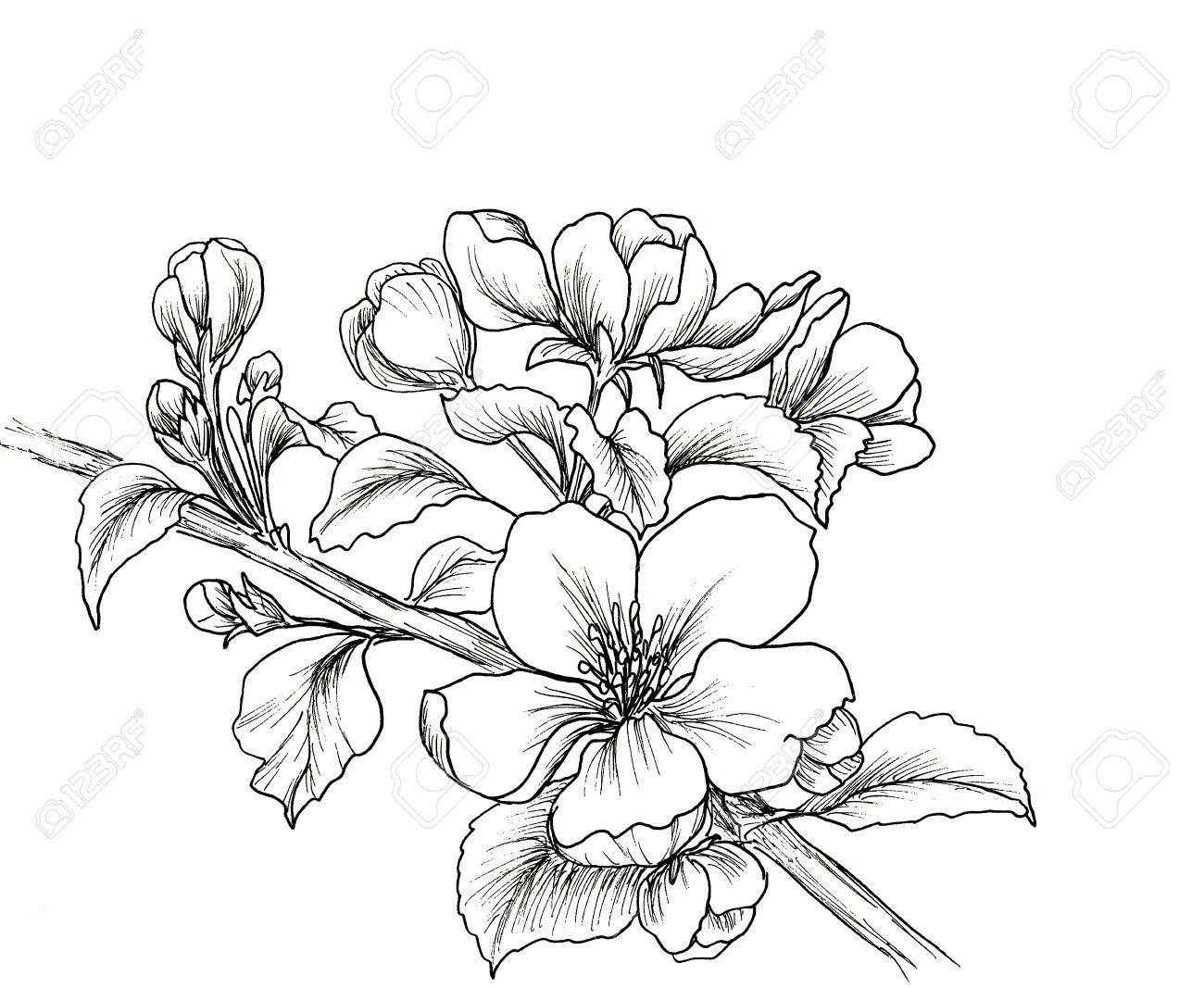 Dessin De Fleur En Noir Et Blanc Signe Infiny Main Branche