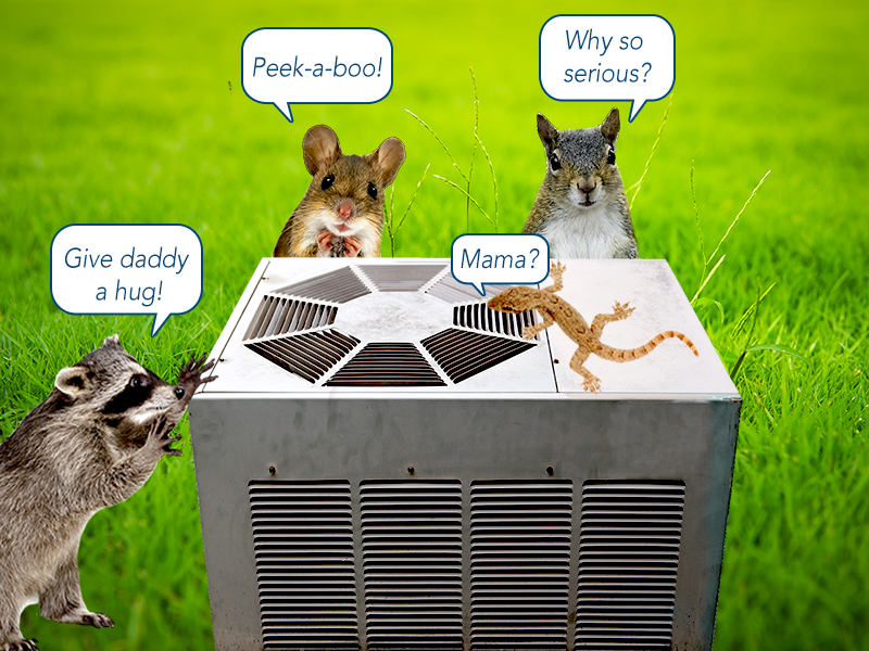 Pests And The Ac System The Critter Crisis Pet Mice Air