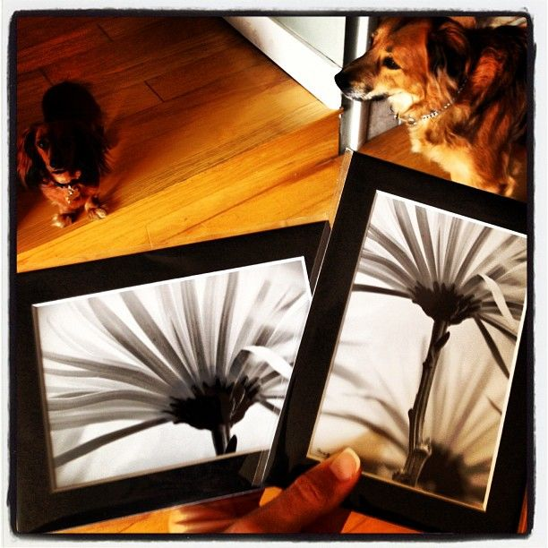 Working on #art prints for a special event! #photography #design  I also have these on canvas at alignbetween.com - beautiful mums!