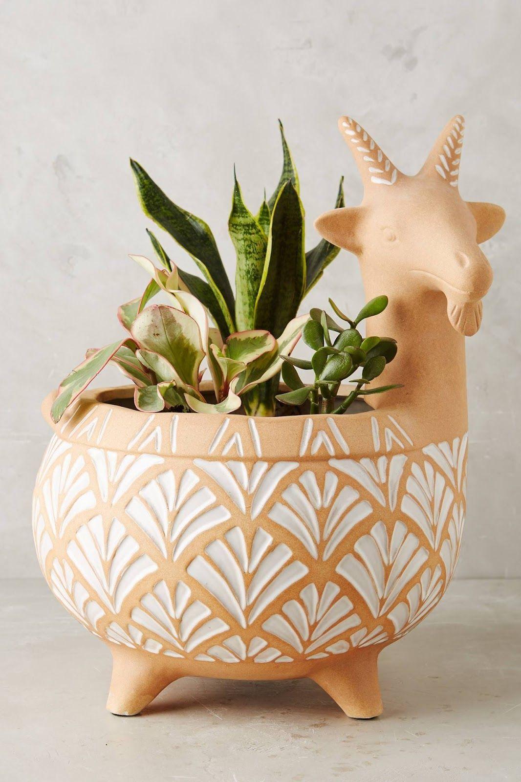Aprendacultivar Br Como Plantar Flores Plantas Frutíferas Orquídeas Suculentas Cactos Folhagens Gramados E Jardins