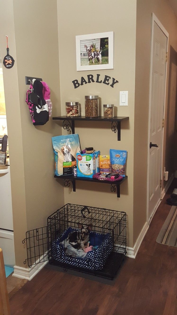 dog care,dog ear cleaner,dog grooming tips,dog nail
