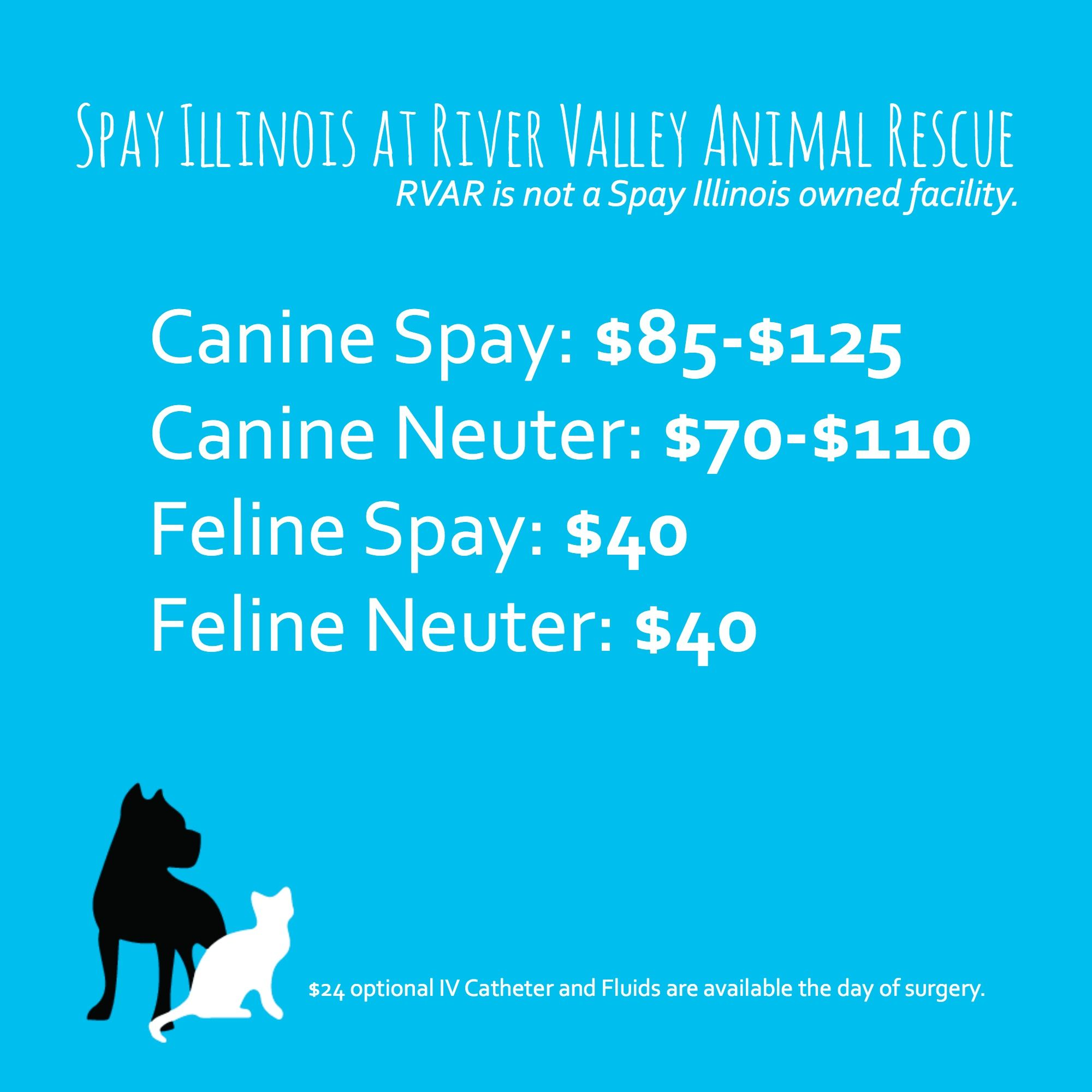 spay neuter for pet owners looking for surgery in