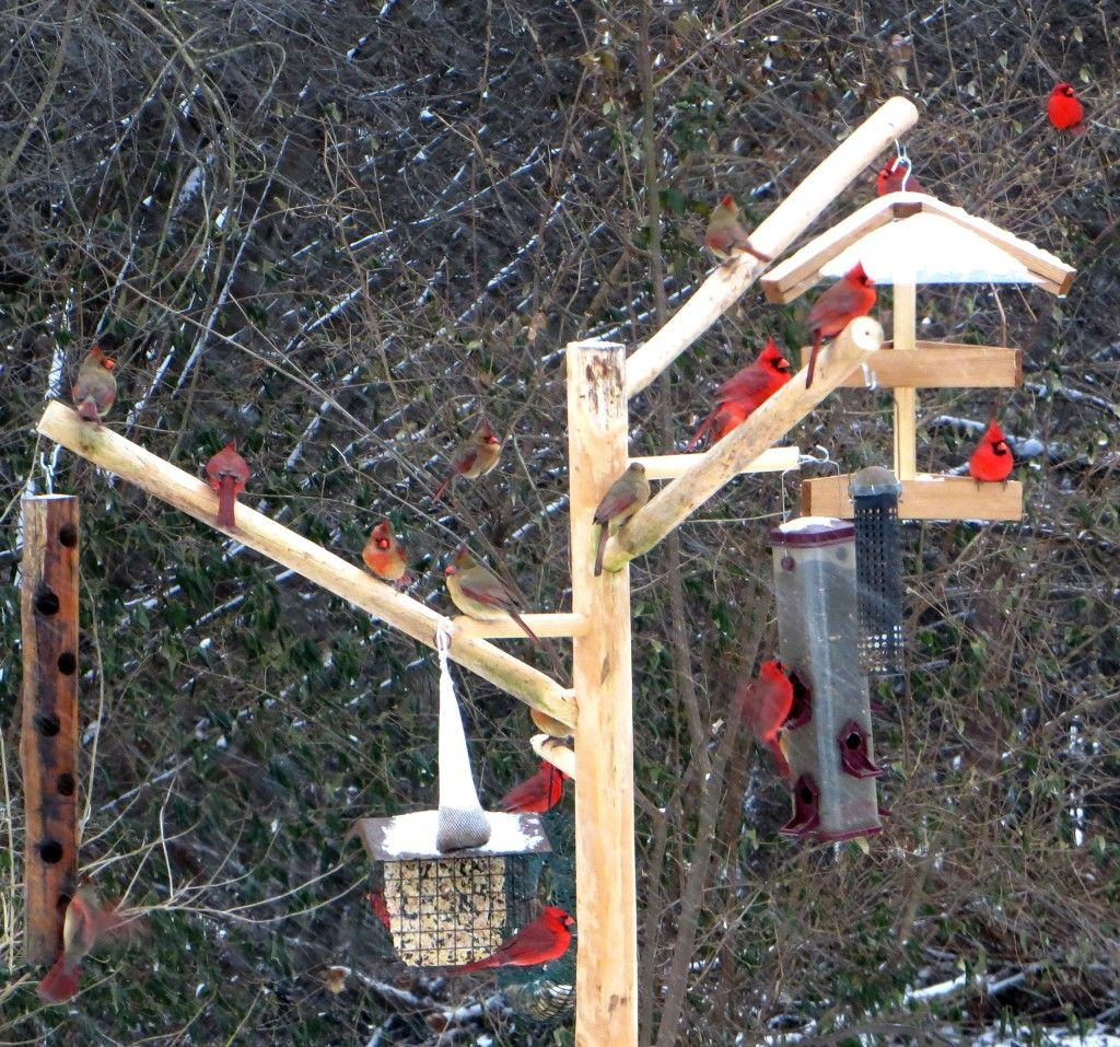 Our Natural Wood Bird Feeder Poles Are Decorative Strong And Sturdy Bird Feeding Station Bird Feeder Poles Squirrel Proof Bird Feeders