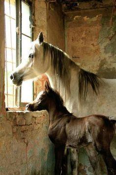 Anne Ile Yavru At Eşek Katır Pinterest Horses Beautiful