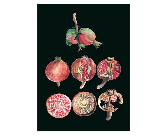 Pomegranates art print of original watercolor by lunapeonyart