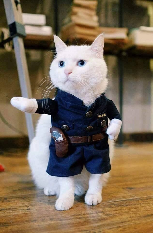 Very interesting post: TOP 55 Funny Cats Pictures. Also dompiсt.сom lot of interesting things on Funny Cat.