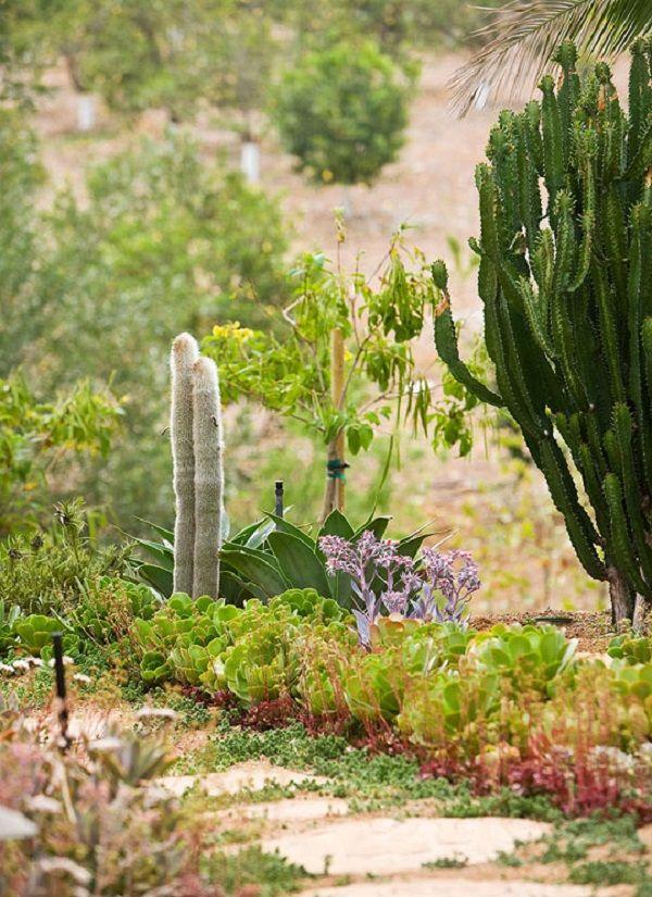 Guia de jardin. Blog de jardinería y plantas. Jardín en casa.: Jardín de cactus y suculentas