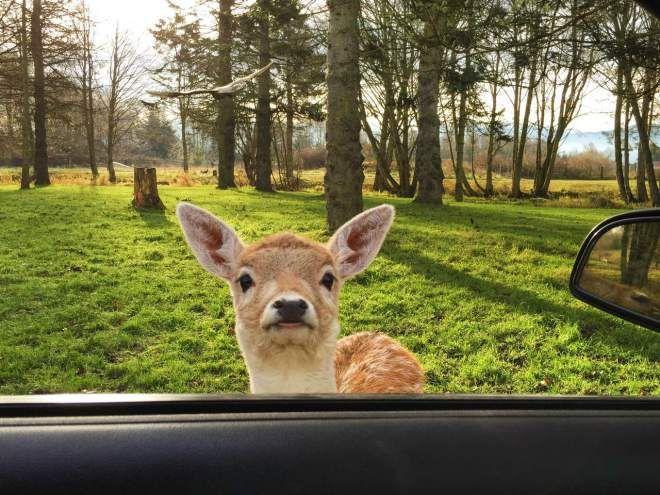 صور حيوانات مضحكه Cute Little Animals Cute Animals Animals