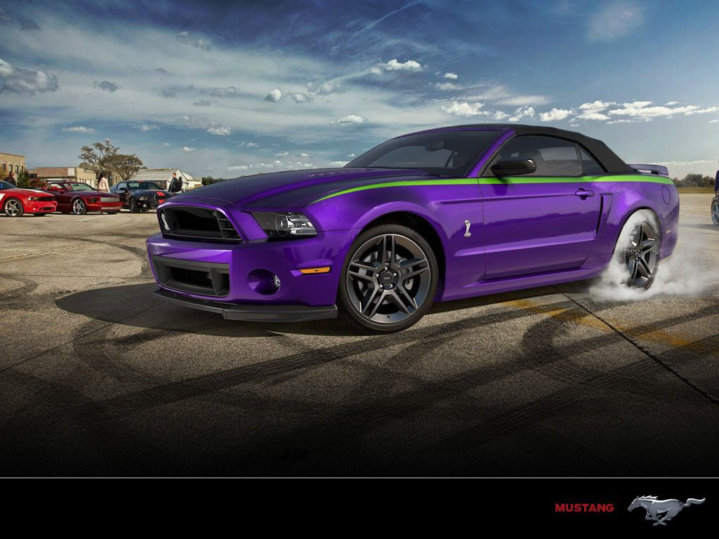 Shelby in deep purple with a lime green stripe
