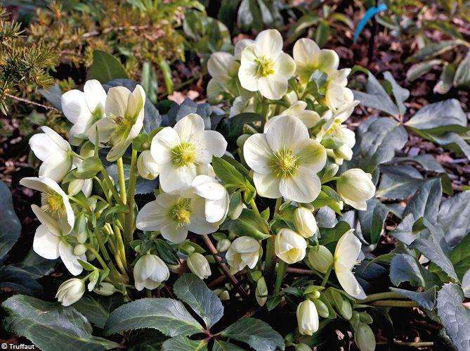 Quelles plantes et fleurs pour un jardin d\'hiver fleuri ...