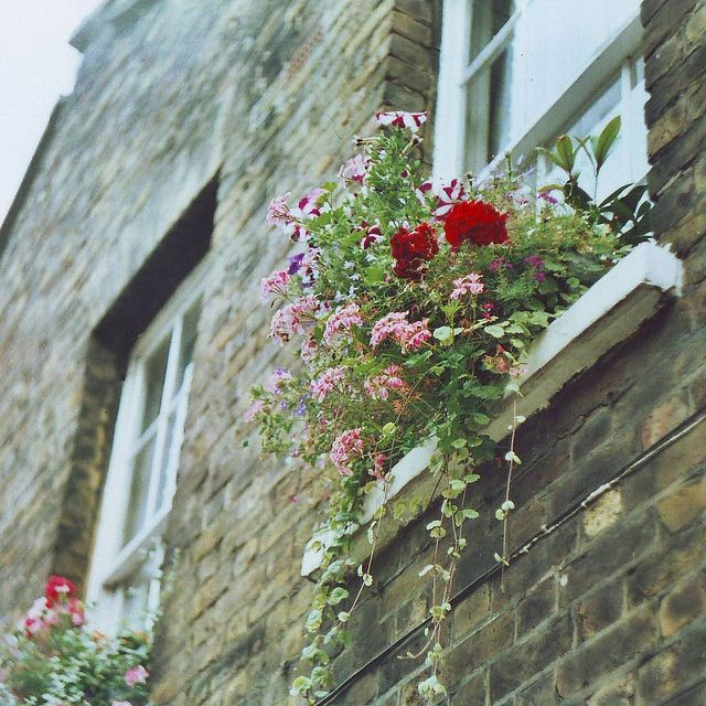 Make use of every bit of outdoor space you can #homesfornature