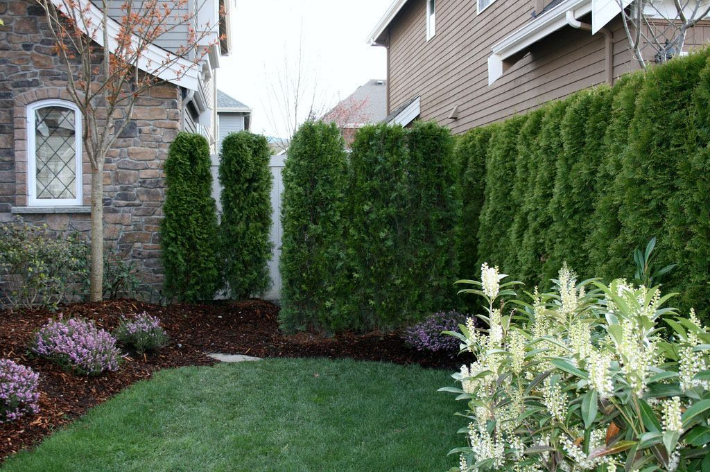 Outdoor Noise Blocking Plants Small Yard Landscaping Privacy