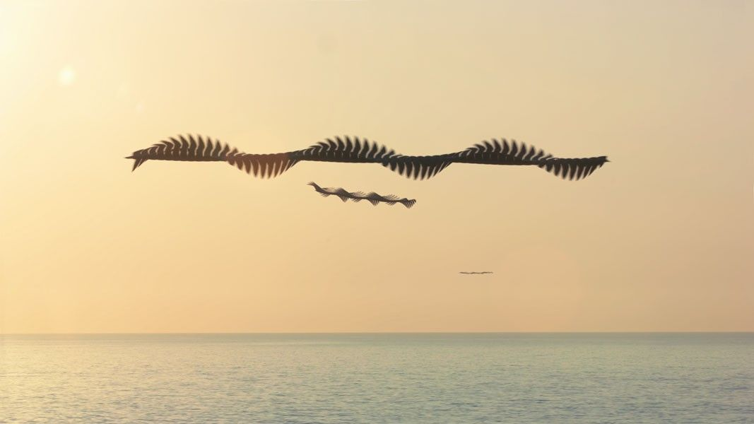 tw_ornitgraphie01  flying birds pattern