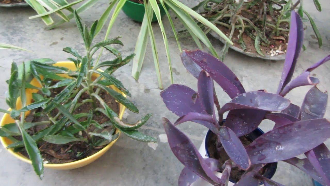 Small Pot Gardening in 2019 | Nancy White | Garden, Growing plants ...