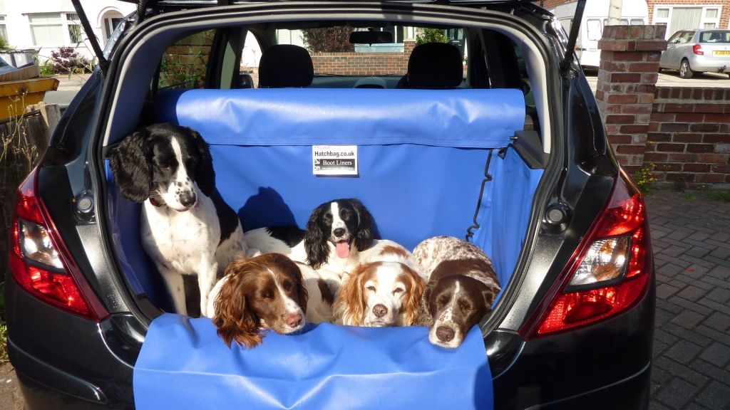 How Many Dogs Can You Fit In A Corsa We Don T Believe You Should