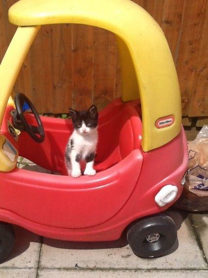 Kittens For Sale Kitten For Sale Black White Kittens Cute Kittens For Sale
