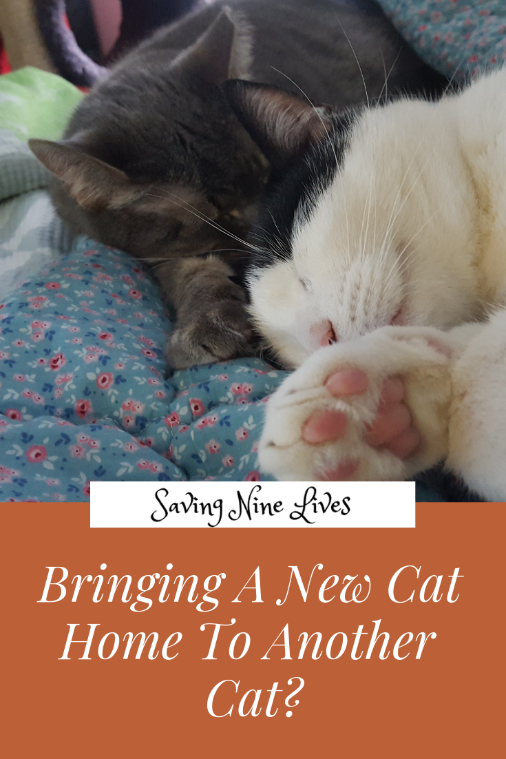 Learn The Best Way To Introduce A Newly Adopted Cat Into Your Household Cat Care Cats How To Introduce Cats