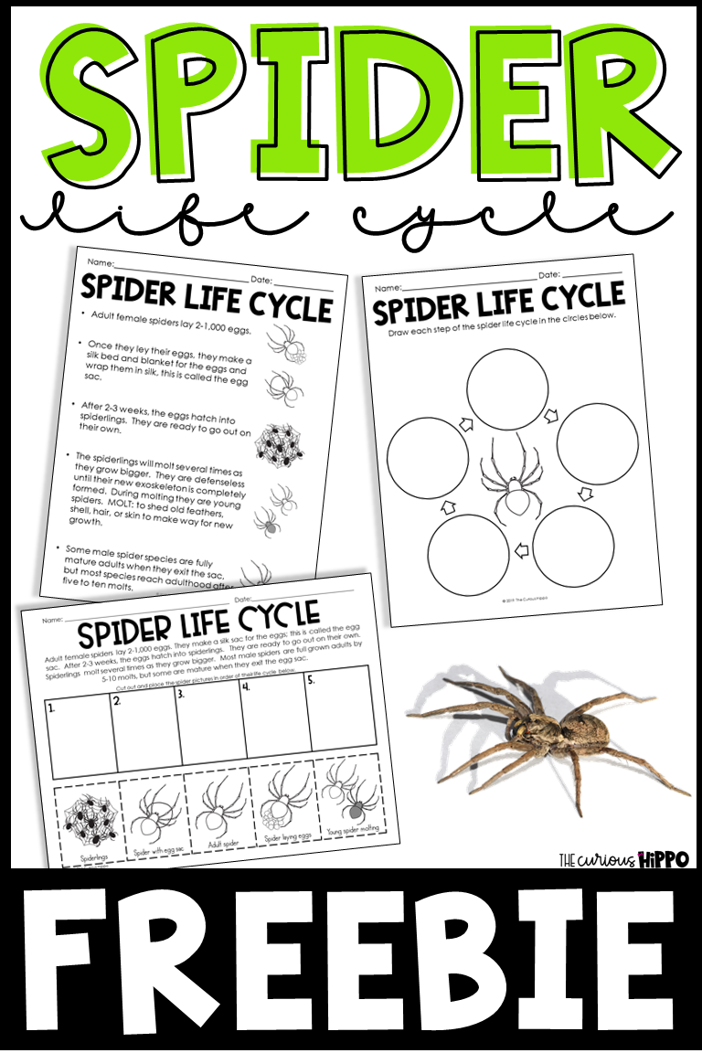 Spider Life Cycle Freebie Life Cycles Kindergarten Lesson Plans Free Spider [ 1152 x 768 Pixel ]