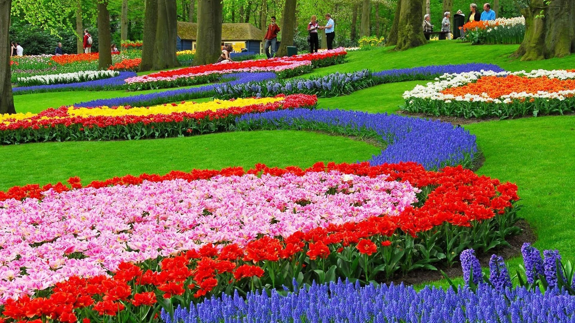 Beautiful Flower Garden Hd Photo