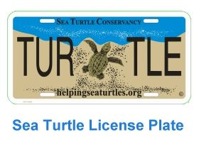 adopt a sea turtle!--i have this plate!!  I want a turtle!!