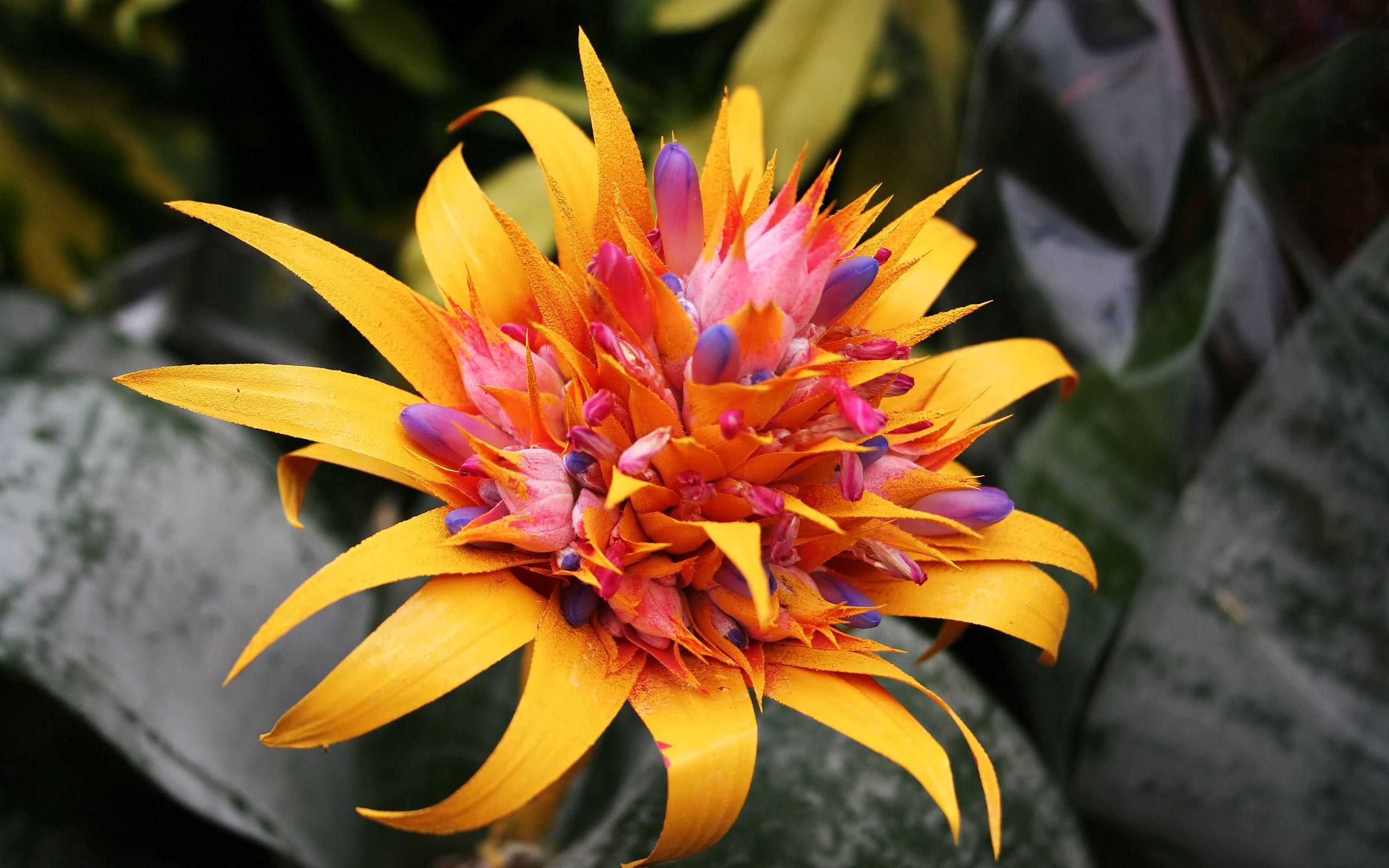 Tropical flowers google flowers pinterest tropical tropical flowers google izmirmasajfo