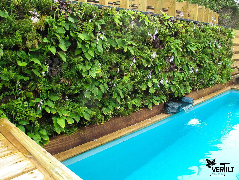 Creation Mur Vegetal Exterieur mur végétal extérieur au bord d'une piscine. | mur végétal