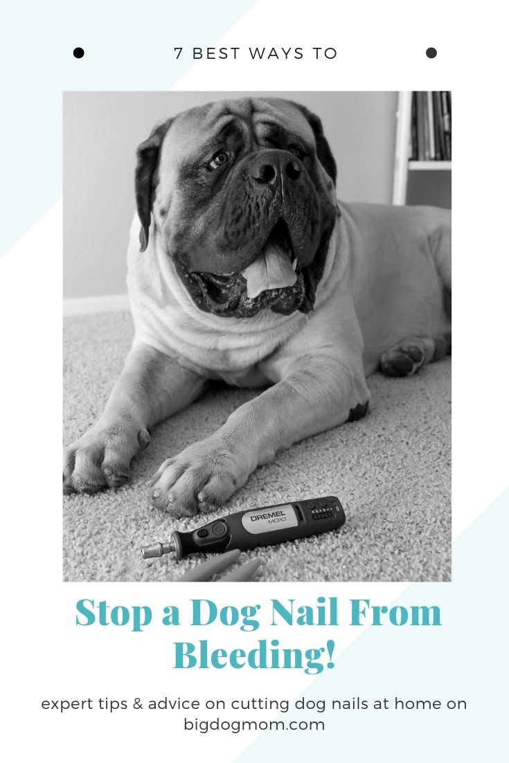 how to stop a dog's nail from bleeding when cut too short
