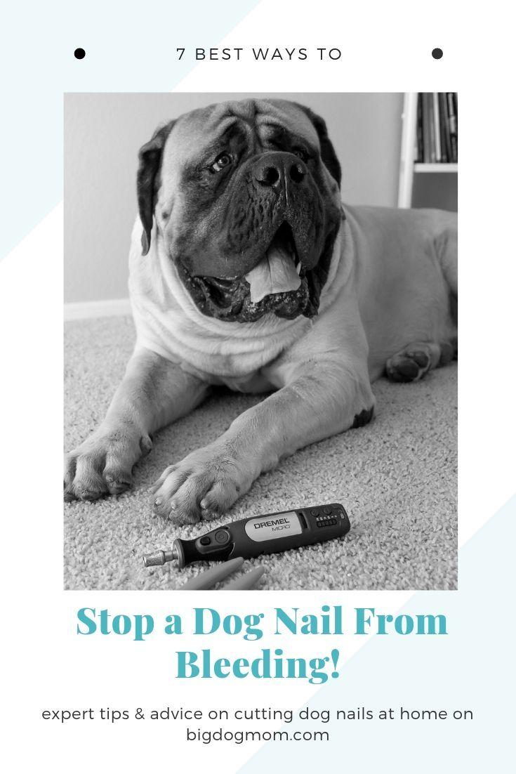 7 best ways to stop dog nail bleeding diy fast dog