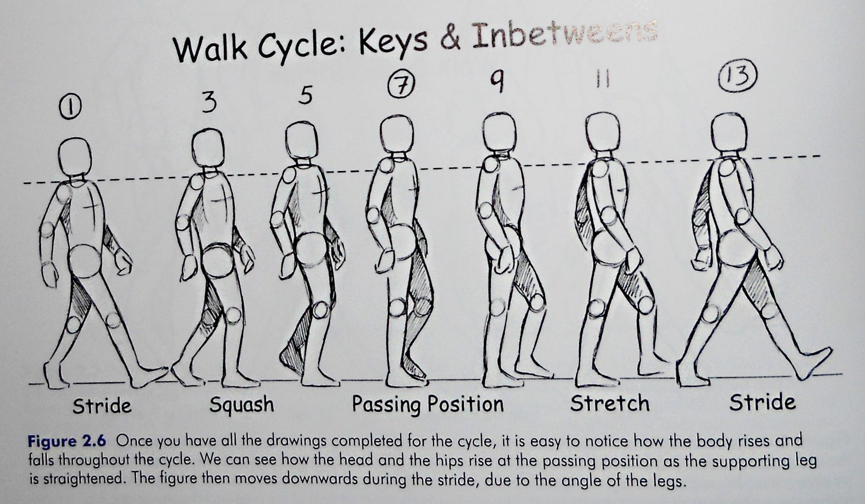Walk cycle rotoscoping animation walk cycle pinterest for Body movement drawing