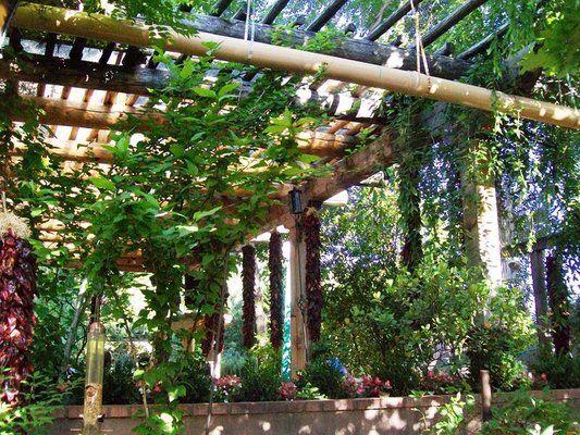 Ornamental Grape Vines Over Pergola Outdoor Gardens