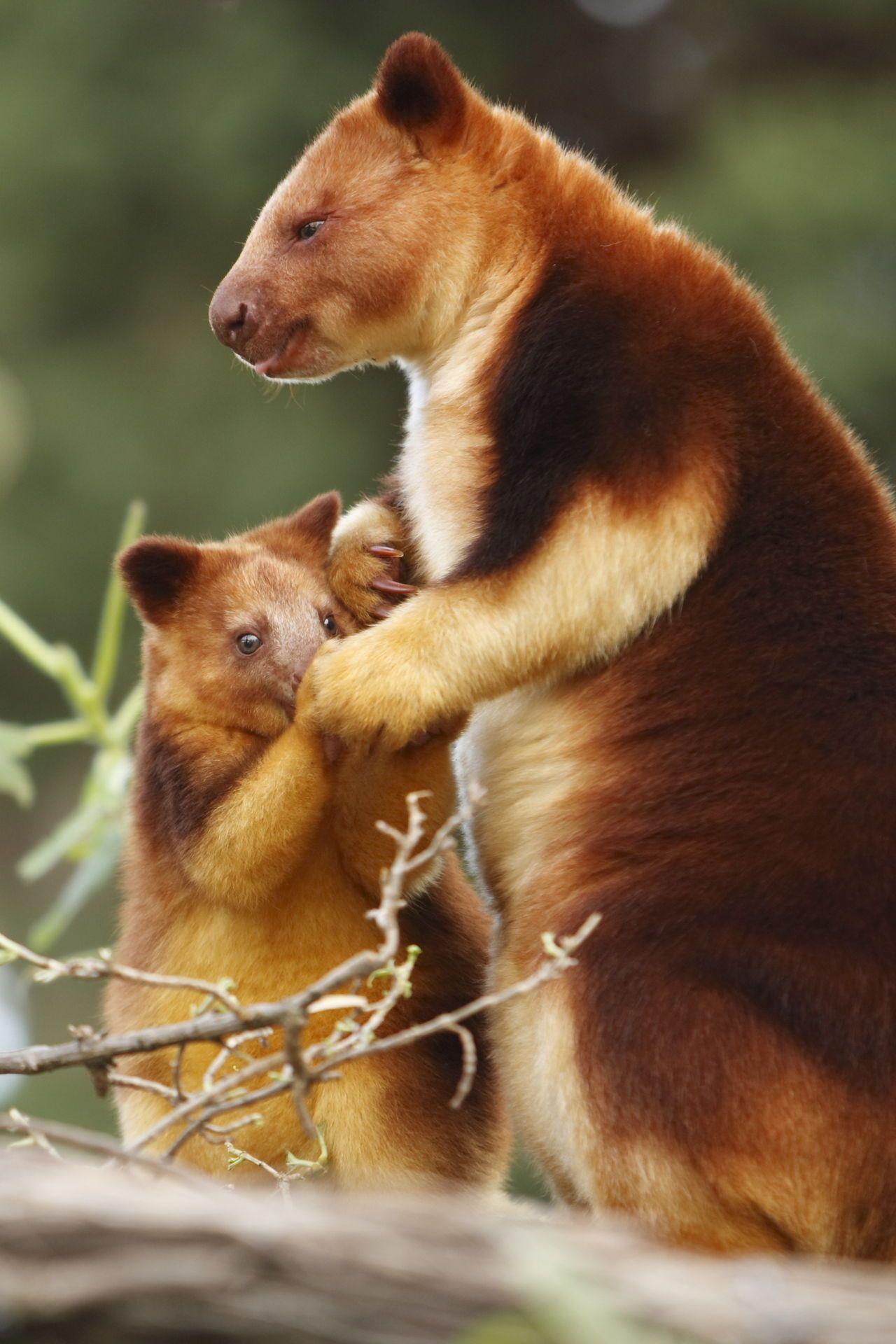 Tropical Rainforest Animals List Rainforest animals