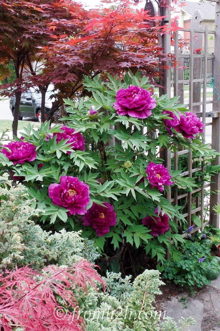 Shade Loving Shrubs 10 Beautiful Bushes To Plant Under Trees Y
