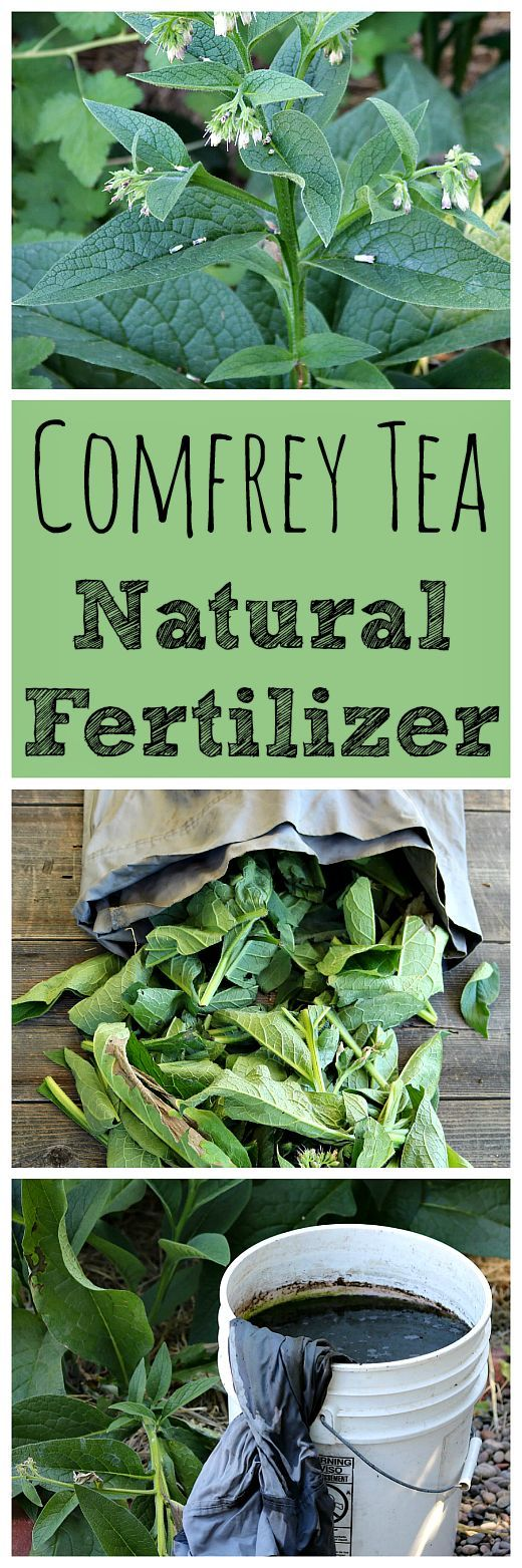 Comfrey Tea Homemade Natural Fertilizer Bloggers Best 400 x 300