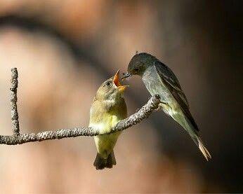 Feeding birds ...