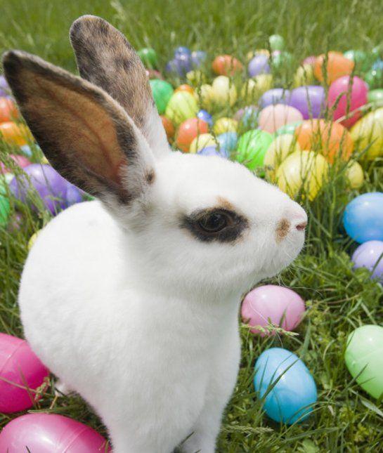 10 Popular Pet Rabbit Breeds Pet Rabbit Rabbit Breeds Pet Rabbit Care