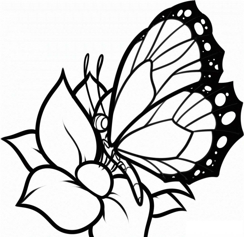 Coloring Pages Flowers And Butterflies Butterfly Coloring Page Flower Coloring Pages Printable Flower Coloring Pages [ 996 x 1024 Pixel ]