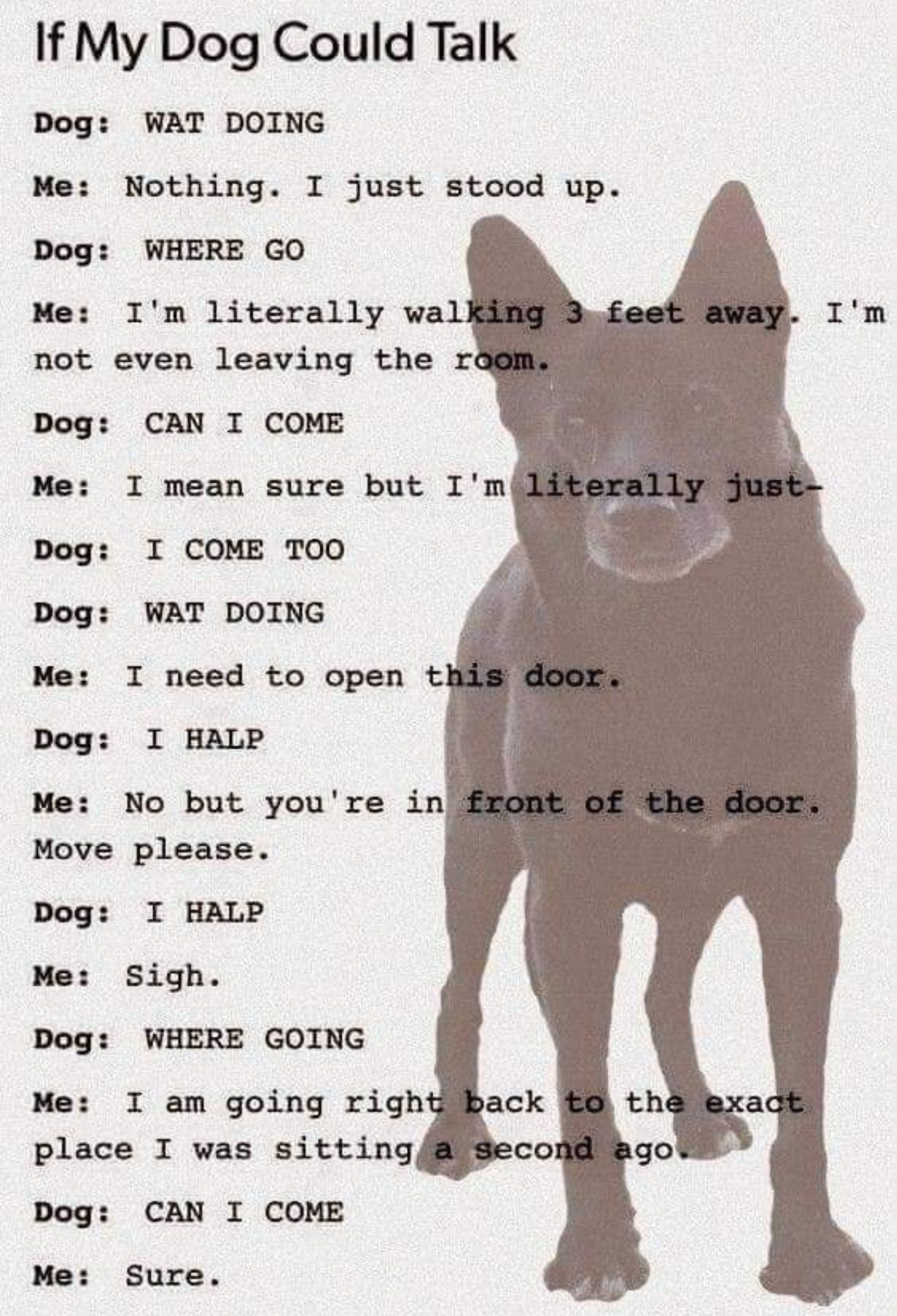 And God Forbid You Go To The Bathroom My Mutts Get Upset Because I Ve Closed The Shower Curtain Woo Hoo Magic Water If Dogs Could Talk Dog Quotes Funny Dogs