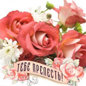 Минске купить розы букеты красивые фото цветов кемерово жасмин