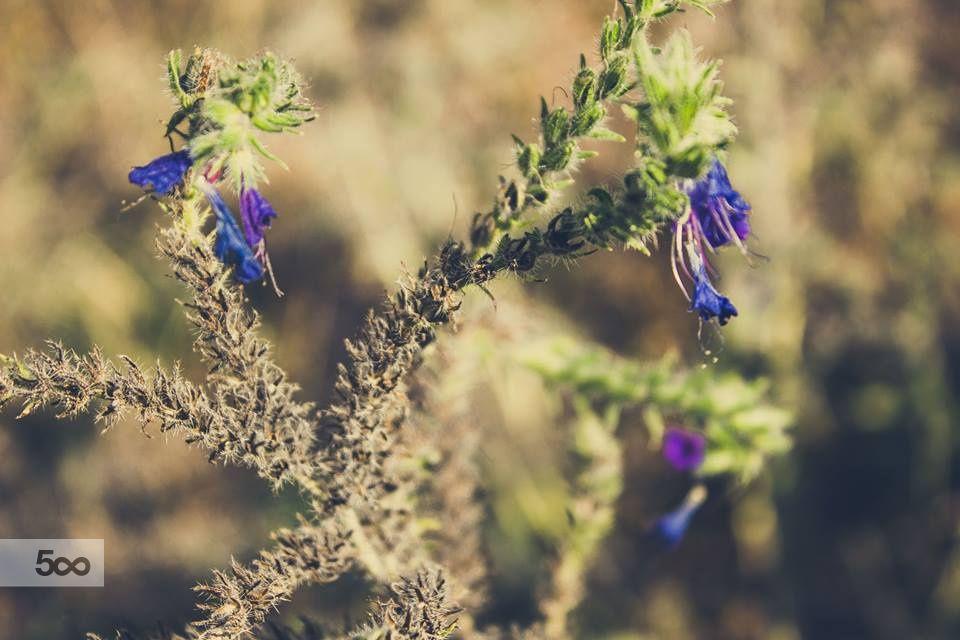 Blue flowers by Lita Akhmetova on 500px