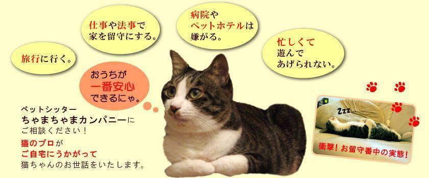 品川区大田区近郊 猫専門ペットシッターちゃまちゃまカンパニー ペットシッター 猫 大田