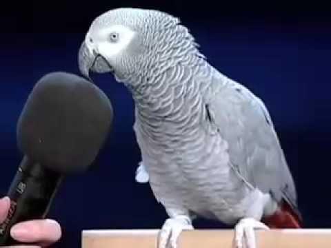 Einstein the bird - YouTube. SC6/4/15