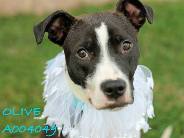 UPDATE OLIVE HAS BEEN ADOPTED! )When I walked past