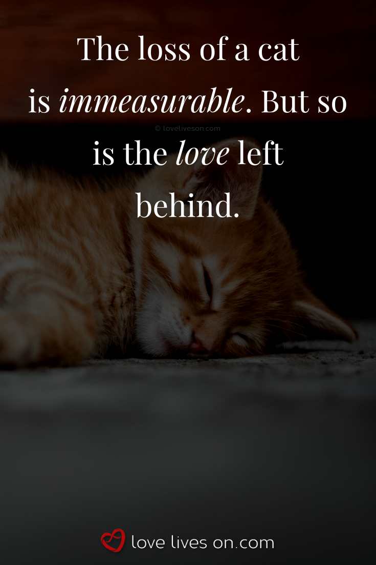 50+ Beautiful Loss of Pet Quotes | naughty cats | Pet quotes